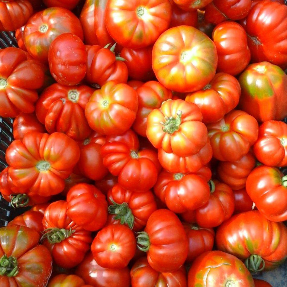 pomodori (1)